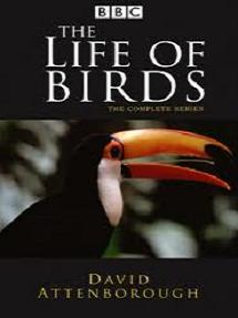 lifeofbirds